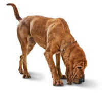 Bloodhound Clipart - Cliparts Zone