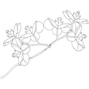 Orchid Clipart PNG Image - Cliparts Zone
