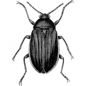 Beetle Clipart - Cliparts Zone